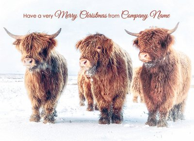 Highland Cows in Winter Personalised Christmas Card - Front Personalisation