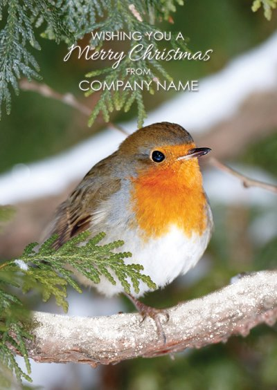 Robin in Fir Tree Front Personalised Christmas Card