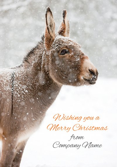 Miniature Donkey in the Snow Front Personalised Christmas Card
