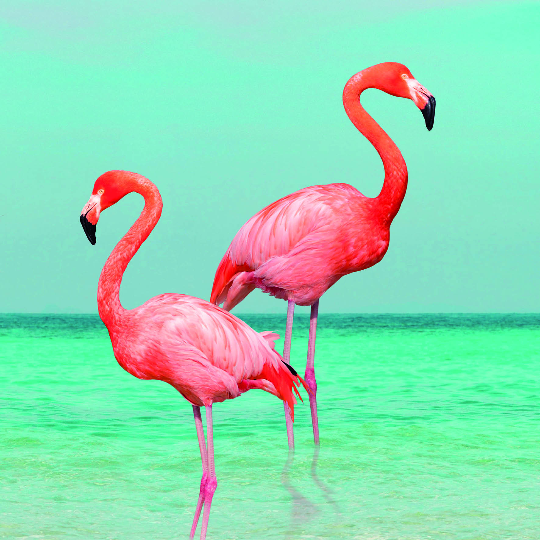 Flamingos Greetings Card