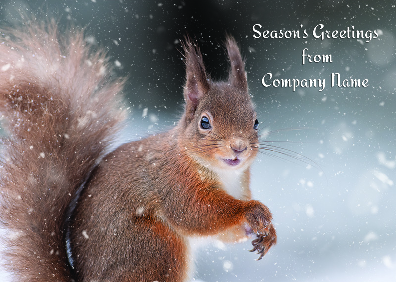 Cheerful Squirrel Personalised Christmas Card - Front Personalisation