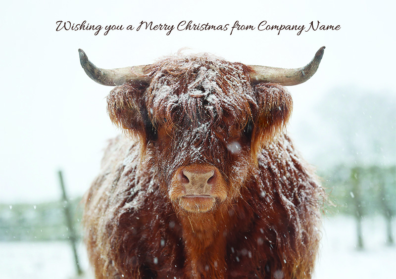 Highland Cow Personalised Christmas Card - Front Personalisation