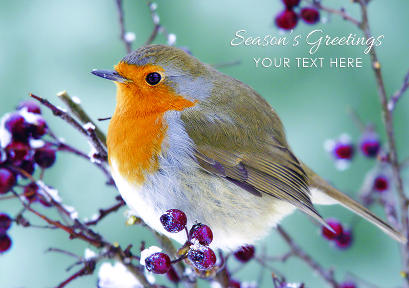 Robin and Berries Personalised Christmas Card - Front Personalisation