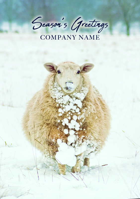Snowy Sheep Personalised Christmas Card - Front Personalisation