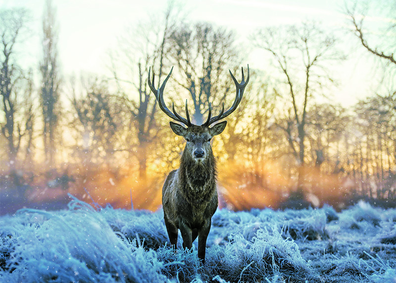 Stag at Sunrise Personalised Christmas Card