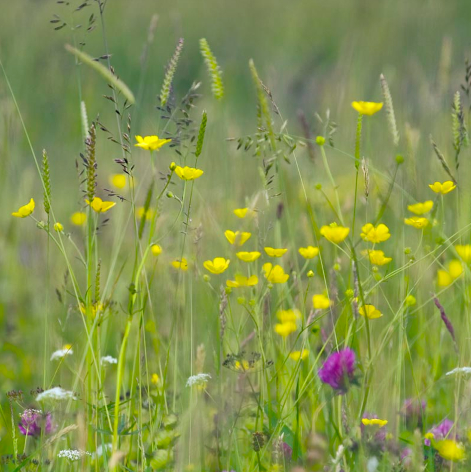 Hay Meadows Greeting Card