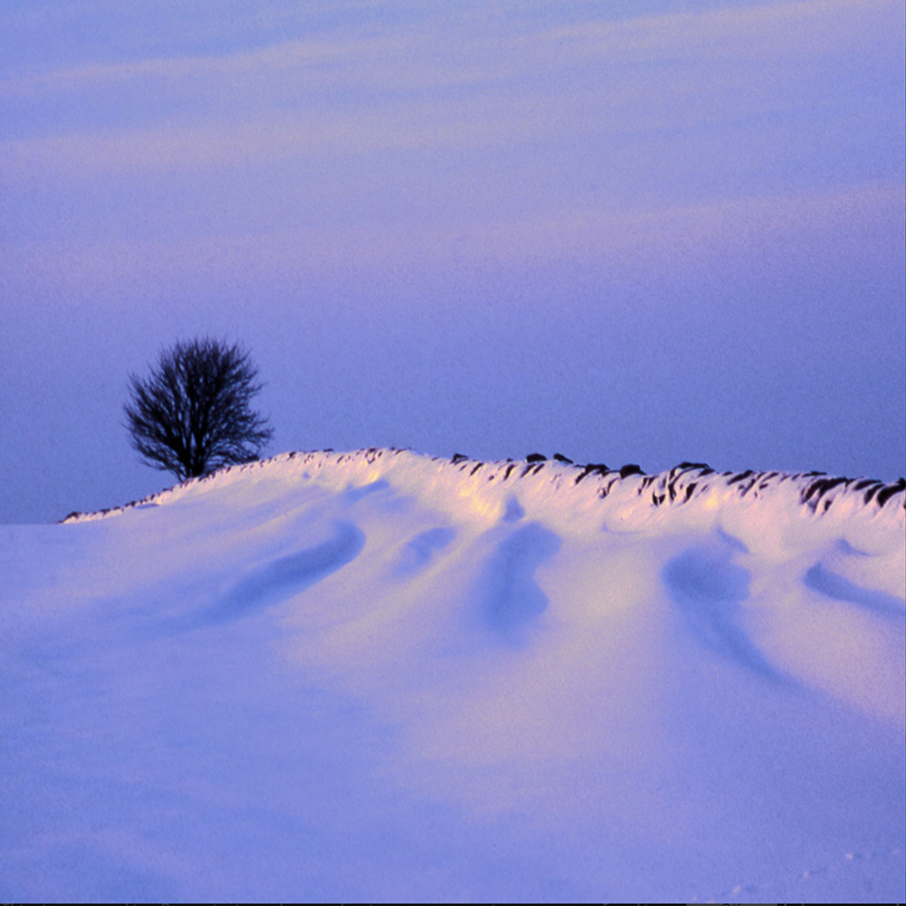 Deep Snowdrifts Christmas Card Pack (10)