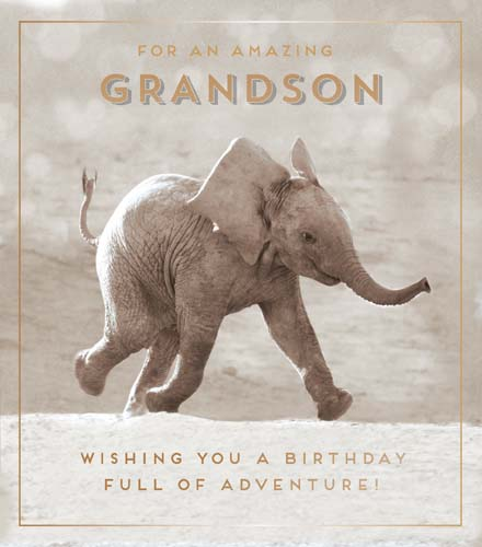 Elephant Grandson Birthday Card