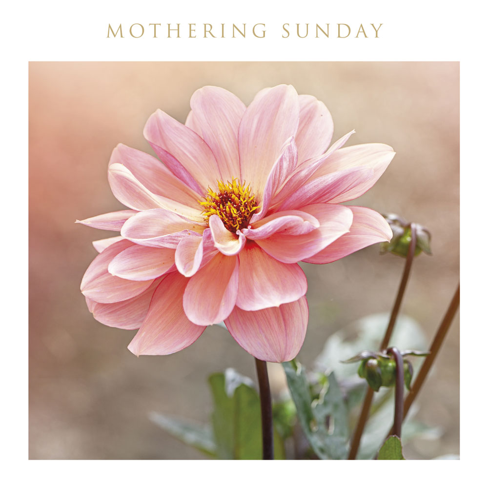 Pink Flower Mothering Sunday Card