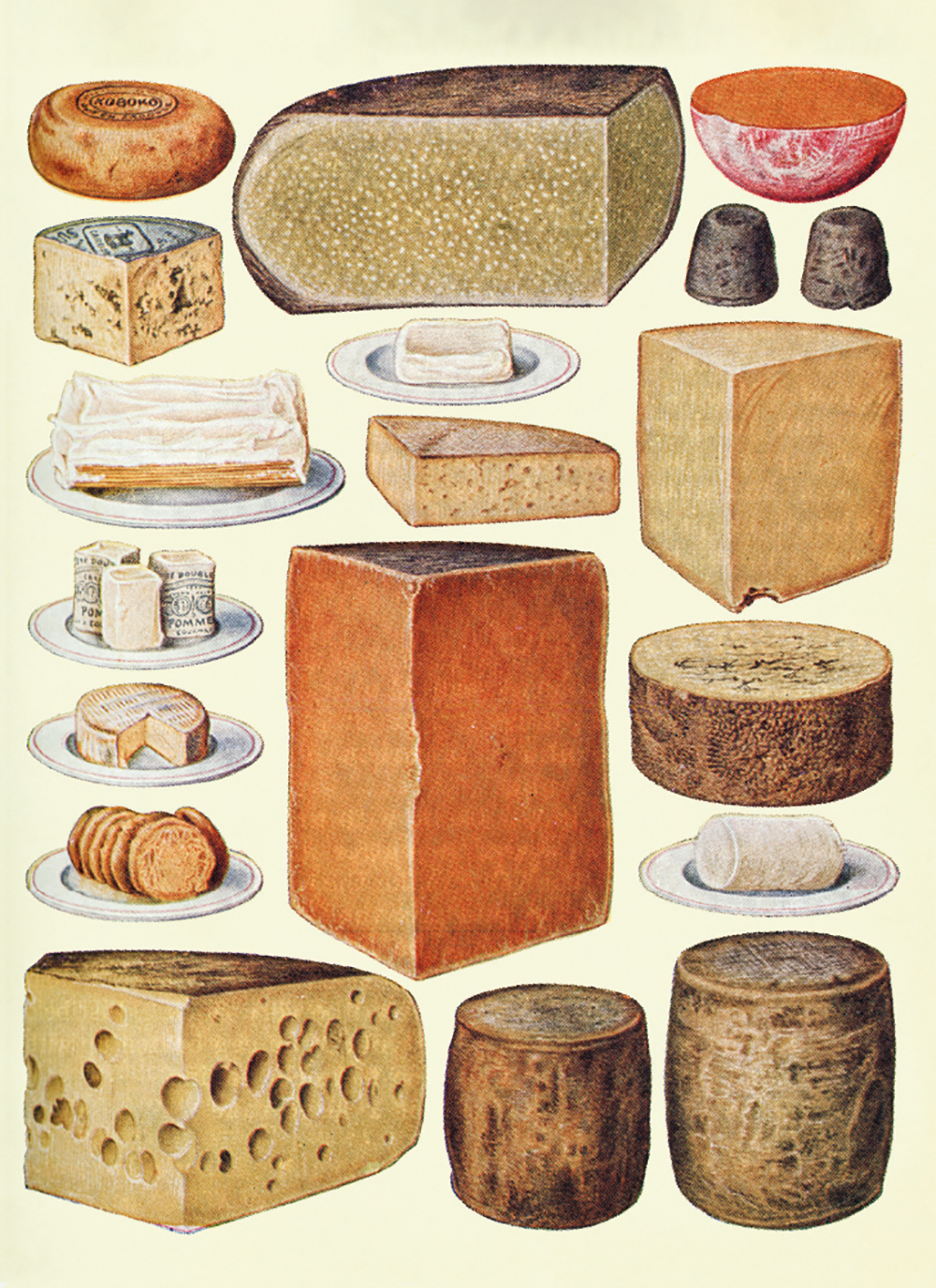 Types of Cheese Greeting Card