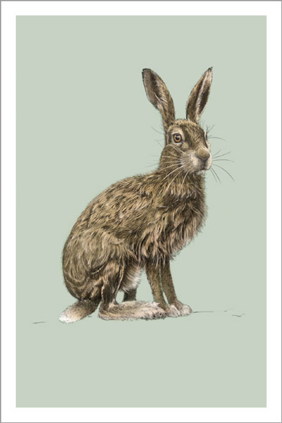Hare Notecard Pack (10)