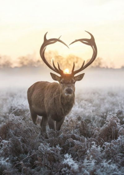 Frosty Stag Personalised Christmas Card