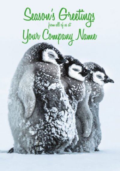 Icy Penguins Front Personalised Christmas Card