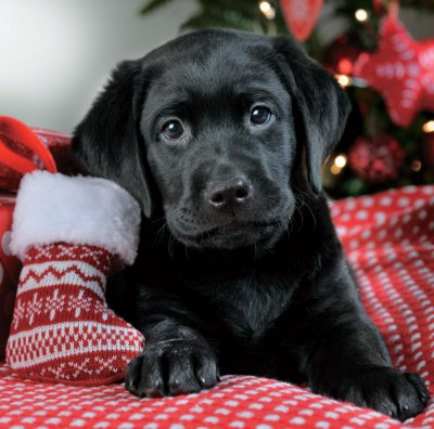 First Christmas Puppy Save the Children Christmas Pack (10)