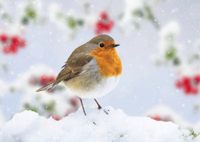 Robin in a Snowy Garden Personalised Christmas Card