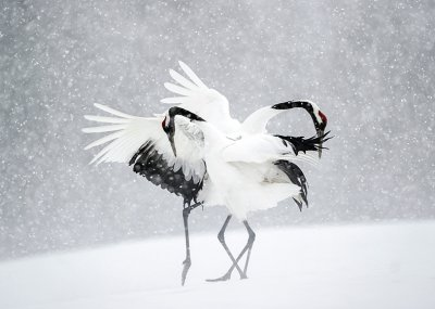 Dancing Cranes Personalised Christmas Card