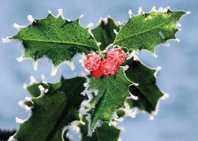 Frosted Holly Personalised Christmas Card