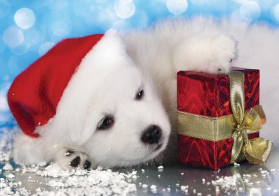 Puppy and Present Personalised Christmas Card