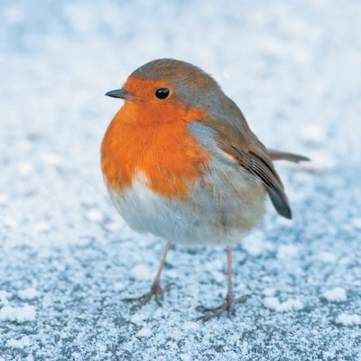 Frosty Morning Robin Personalised Christmas Card