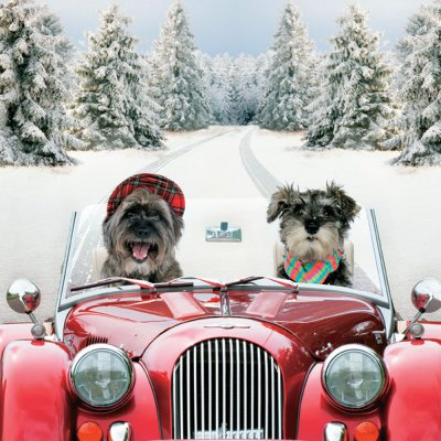 Driving Home Personalised Christmas Card