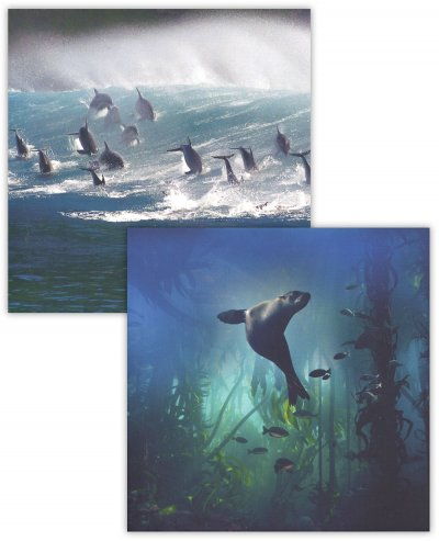 Sea Lion & Dolphins Notecard Pack (8)